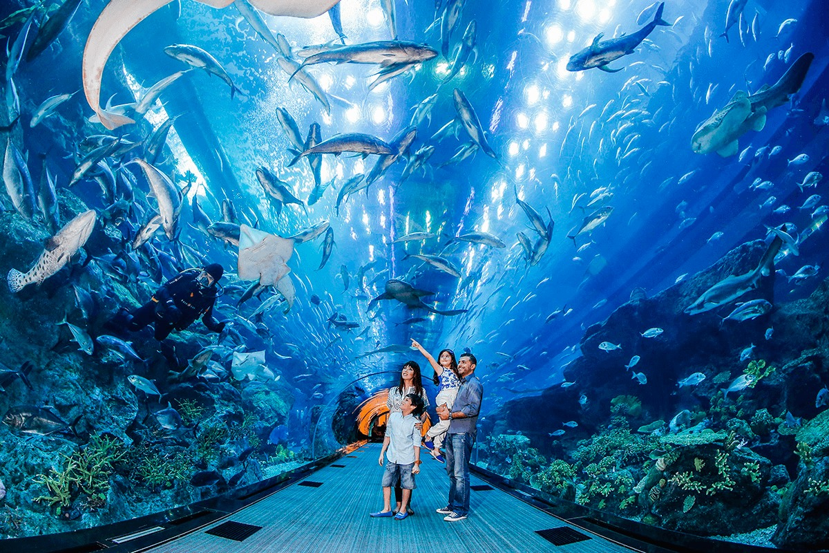 Researcher Ticket Dubai Mall Aquarium _ Underwater Zoo