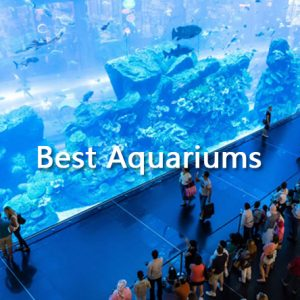Best Aquariums in Dubai